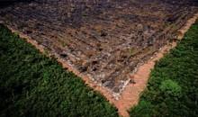 Bolsonaro é denunciado mais uma vez no Tribunal de Haia por destruição da Amazônia